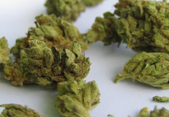 Semillas de marihuana: todo lo que necesitas saber para su cultivo